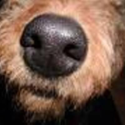 Profile nose