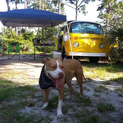 Profile busdog