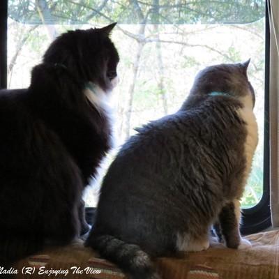 Profile the kittys
