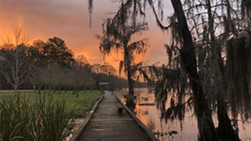 Mossy tree and boardwalk in Louisiana