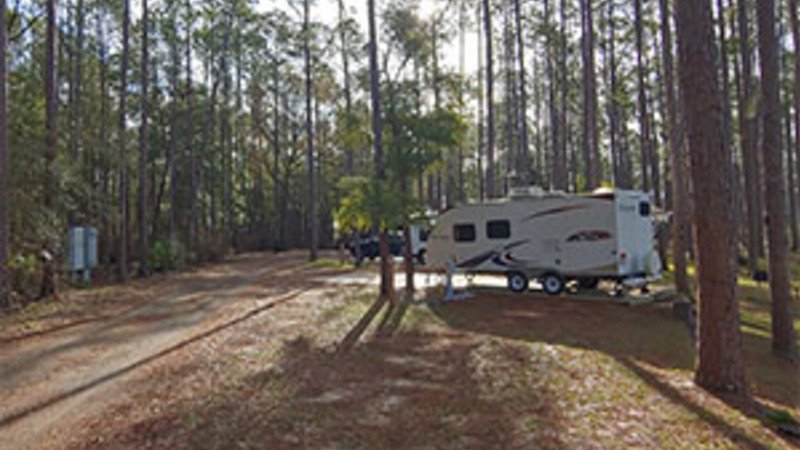 Travel trailer camping among tall trees