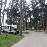 Bastrop state park