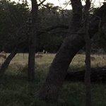 Texana park campground
