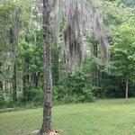 Magnolia ridge park