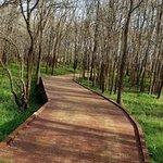 Palmetto state park