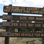 Ashurst lake campground