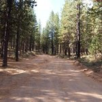 Forest road 300