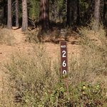 Forest road 260