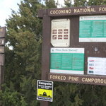 Forked pine campground