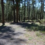 Horse springs campground sitgreaves nf