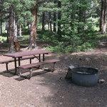 Halfmoon campground white river nf