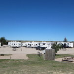 Cheyenne koa