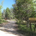Yellow pine campground