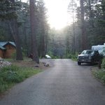 Black canyon campground santa fe nf