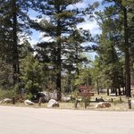 Pines campground