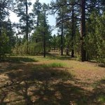 Quaking aspen campground cibola nf