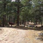 Springtime campground