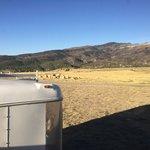 Sheep creek utah