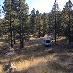Singletree campground