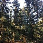 Tinney flat campground