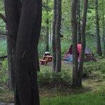 Wild duck adult campground