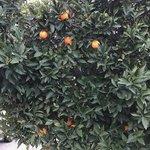 Orange grove rv park