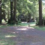 The redwoods rv resort