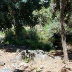 Sequoia rv ranch