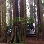 Emerald forest cabins rv