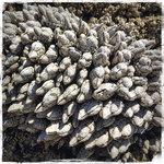 Seal rock rv cove
