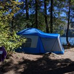 Swift forest camp