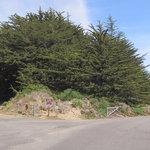Bodega dunes campground