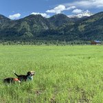 Star valley ranch resort