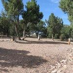 Arizona high country campground