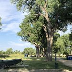 Cottonwood camp