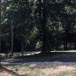 Dogwood springs campground jasper ar
