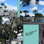 Big tree rv park