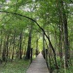 Suwannee river hideaway campground