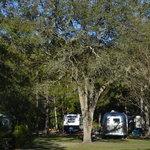Okefenokee pastimes camping