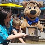 Yogi bears jellystone park camp resort illinois