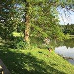 Timber lake resort