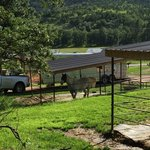 Elk haven horse camp