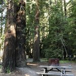 Grizzly creek redwoods state park