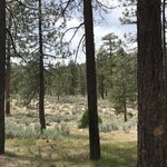 Horse flats campgrounds