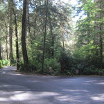 Jedediah smith campground