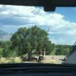 Coronado campground