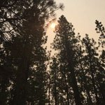 Logger campground