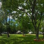 Tanglewood camping