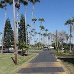 Alamo palms rv resort
