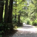Mill creek campground klamath